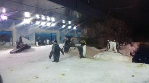 Hej det är Ture. Igen. Alma och jag har sett pingviner som ni ser på bilden.